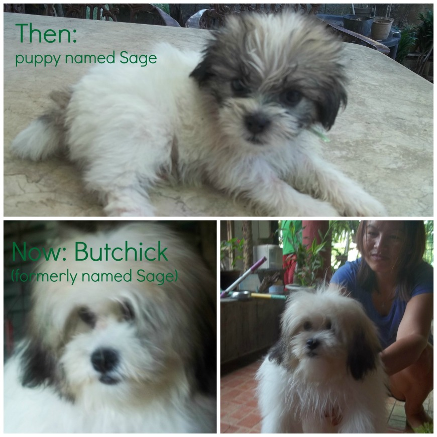 butchick puppy