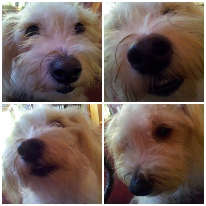 VB selfie